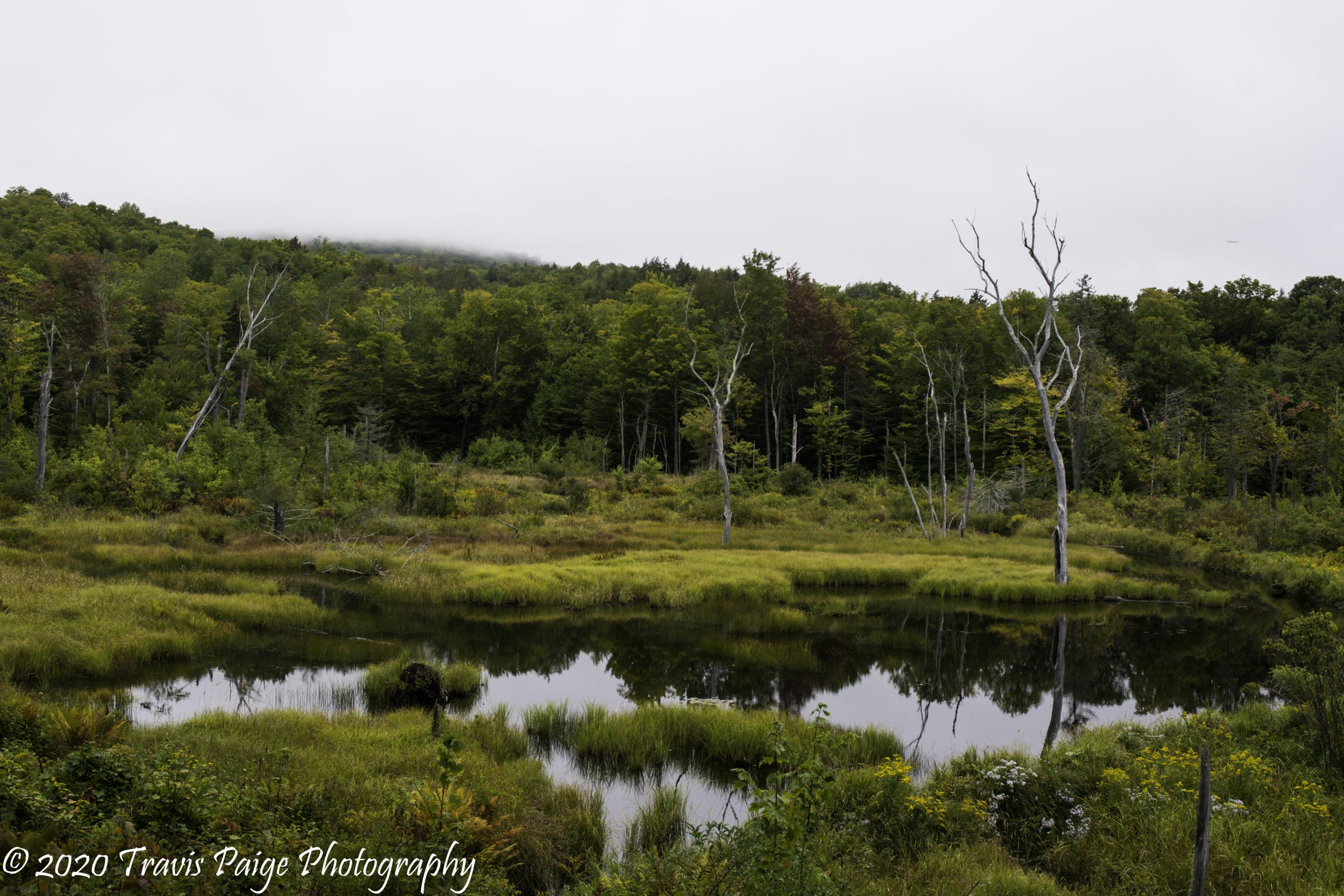 Upper Valley Mountain Biking Green Woodlands